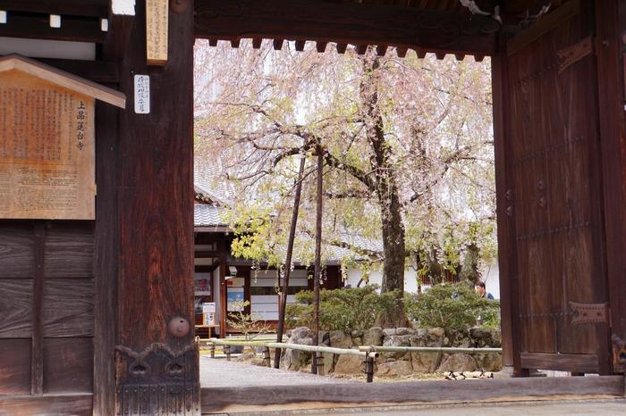 「上品蓮台寺(じょうぼんれんだいじ)」は、知る人ぞ知る桜の穴場スポット。観光寺院ではないので参拝者は少なく静かに桜を眺めることができます。金閣寺や北野天満宮からも近いので、少し足を延ばして訪れてみてはいかがでしょうか?