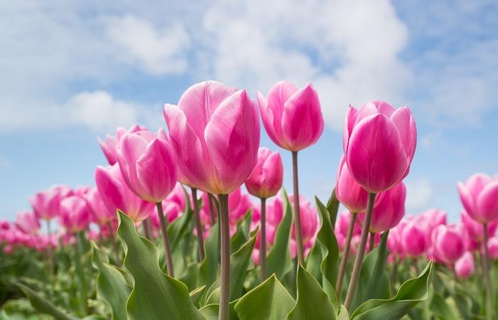 すこしずつ朝の風が気持ちよくなる季節がやってきました。朝の時間を有効に使う「朝活」は、春こそ始めるのにぴったりです。ひと口に朝活といっても、どんなことをするかによって過ごし方は千差万別です。心と体が整う朝活をご紹介していきましょう。