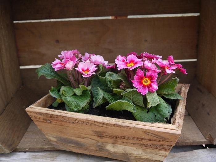 植物の株は、適度な間隔をあけて植えるのが大切なので、余裕をもって、少し大きめのプランターを選びましょう。また、プランターの素材は、プラスチックが安価で手に入れやすいのですが、通気性があって水を吸収する陶器製や木製がより望ましいようです。