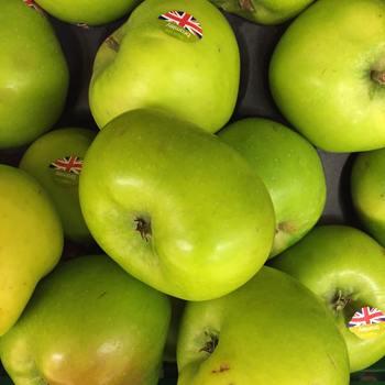 英国との交流から長野県北部で栽培されている青りんご「グラミー・スミス」と画像の「ブラムリ―」。 どちらも強い酸味と渋みをもち、本国ではcooking appleとしてパイや肉料理のソースに大活躍。長野県でも毎秋、ジャムやパイが製造・販売されています。