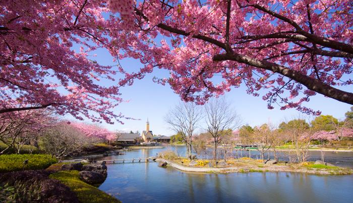 特に春から秋までは四季折々のお花を楽しむことができ、春にはさまざまな種類の桜やキクモモが満開に。