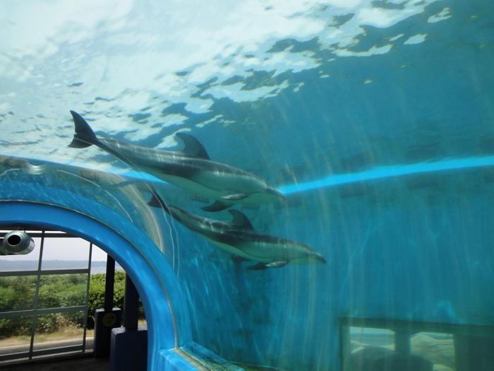 「のとじま水族館」は、和倉温泉駅からバスで約30分のところにあるスポットです。金沢方面から和倉温泉駅までは特急に乗って約1時間で到着。車の場合は、金沢駅から約1時間半で行けますよ。  館内には、イルカやペンギンが泳ぐ「トンネル水槽」やイルカとふれあえるプール、ペンギンのお散歩タイムなど、さまざまな見どころがあります。日本海側最大級といわれる水槽の、迫力あるジンベイザメの泳ぐ姿は必見! ぜひじっくり満喫してみてください。家族でのお出かけにもおすすめです♪