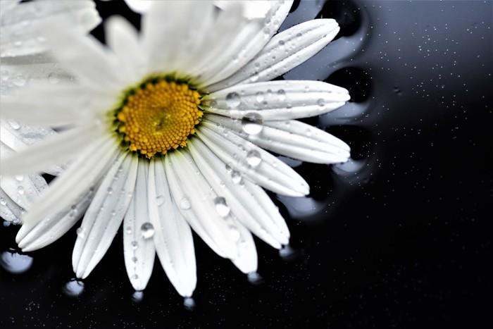 春植えなら3~6月頃に植え付けを。水はけのいい土を好みますので、水の与えすぎに注意しましょう。比較的強い植物ですが、花付きをよくしたいときは春と秋に緩効性肥料を置き肥します。そして、花が終わったら枝の切り戻しをすると、次の花付きがよくなります。