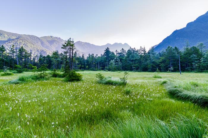 しばらくそのまま歩いて行くと、突然正面が開けて、田代湿原の丁字路に到着。ここでの見どころは、湿原越しに見える穂高連峰。丁字路を右に行くと田代池で、木々の上に霞沢岳を見ることが出来ます。湿原や池の眺めを楽しんみながら一息ついたら、続いて丁字路を左方向に歩き始めましょう!