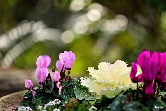 植物には、日当たりを好むものもあれば、半日陰や日陰を好むものもあるなど、適した環境が異なります。暑さへの強さもさまざま。そんな植物の性質をよくチェックして、同じ環境で育つ植物を組み合わせましょう。