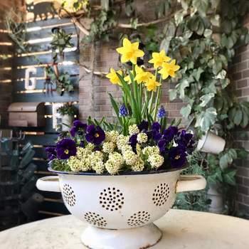 また、紫&黄色、青&オレンジ、赤&緑などの反対色を合わせれば、コントラストが明瞭な鮮やかな寄せ植えに。