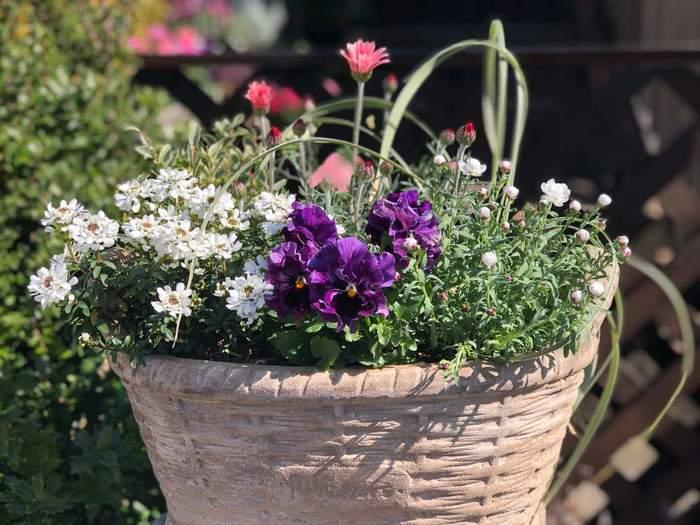 白い花を加えると、全体を上品な印象にまとめてくれます。もう1色プラスしたいと思ったら、白い花をチョイスしてみるのもよさそうですよ。