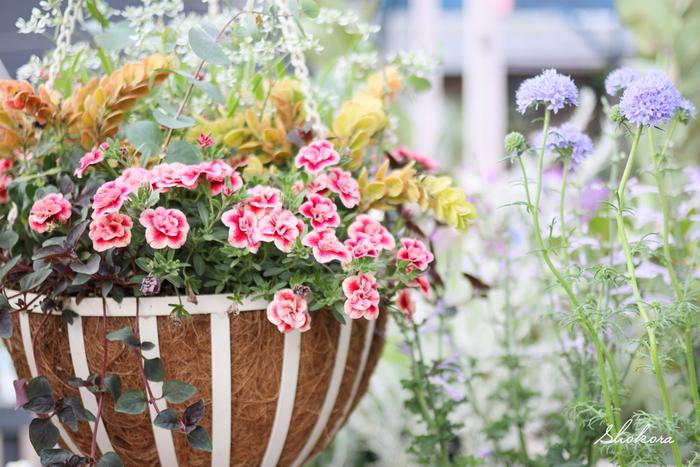 ベランダなどにハンギングタイプの寄せ植えを飾るのも素敵ですね。床や棚に置くだけでなく、目の高さにもお花があると、空間が一気に華やかになります。