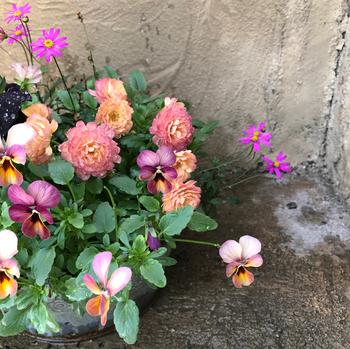 花や葉の大きさや形状、分厚さがよく似た植物を合わせると、全体のバランスがよくなります。