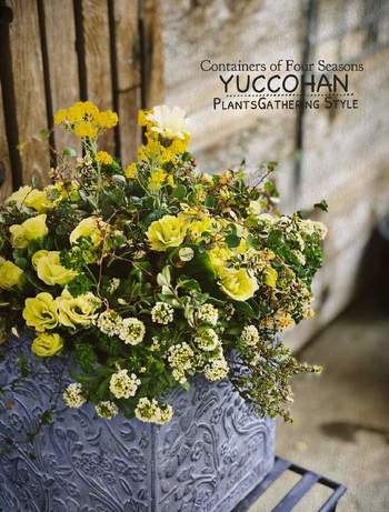 こちらは、黄色のグラデーションを楽しむ、大人の雰囲気の寄せ植え。マスカットのような淡く美しい色合いの「プリムラジュリアン・マスカットのジュレ」が印象的です。