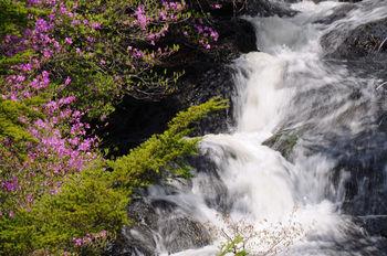 涼しげな水流の周りをツツジが彩った景色は、壮大な迫力の華厳の滝とはまた異なる美しさがあります。