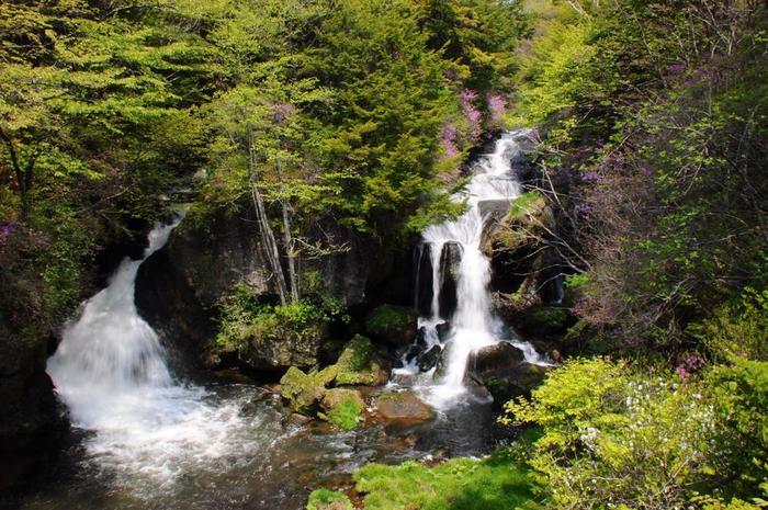 華厳の滝とともに奥日光の三大名瀑とされている「竜頭の滝」。二つに分かれて水が流れる様子が竜の姿に似ていることからその名が付きました。