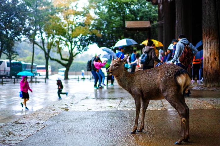 にわか雨。ハプニングすら、いとおしい思い出になる。 お天気のせいで予定が少しくらい崩れても、Que Sera, Sera(ケ・セラ・セラ/なるようになるさ)!仕事じゃないのだから、気にしない&気にしない♪