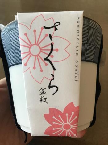 可愛らしい小紋の器で桜盆栽が育てられる、こんな栽培セットも。作り方なども詳しく説明されていますので、お花好きなお母さんの母の日のプレゼントにもぴったりです♪