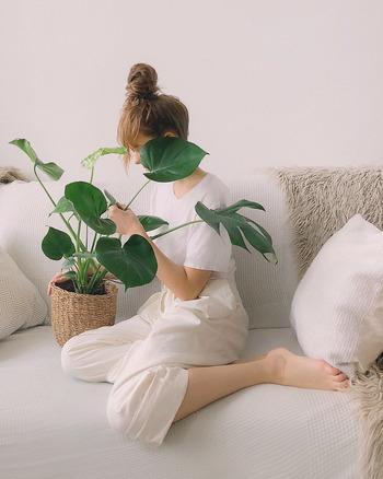 モンステラの花言葉は「献身」。 また、穴が開いた葉が太陽の光を通すことから、希望の光を導く「嬉しい便り」という言葉も付けられているそうです。 自分の部屋に招いて毎日を一緒に過ごすにも、新居祝いなどのプレゼントにするにもピッタリのステキな意味が込められていますね。