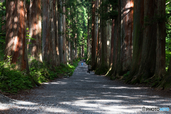 戸隠神社の奥社は長野駅から車で約50分の距離にあるのですべて周る際、スムーズに移動できます。詳しくはマップなどでご確認ください。画像は奥社へと続く樹齢約400年の、大木杉の参道。