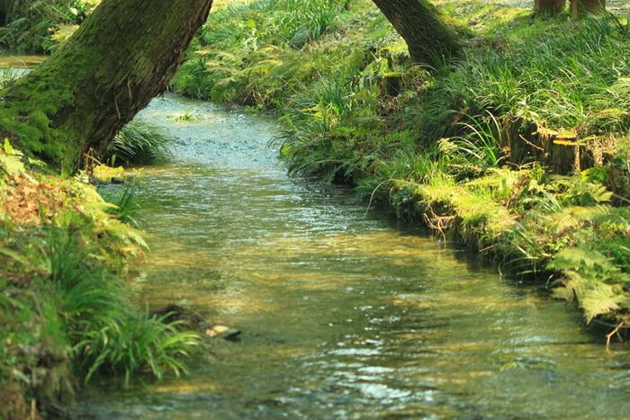 【春の水】 若芽や若草を映す水は、ほんのり淡い緑色。生命の目覚めの季節は、穏やかな光できらめきます。陽射しが心地いい日に、いつも目にしている小川や池に目をやれば、きっと薄柳色に出合えますよ。