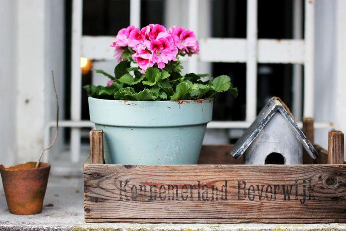 生き生きとした生命力あふれる春*「プランター」でお花を育てませんか?