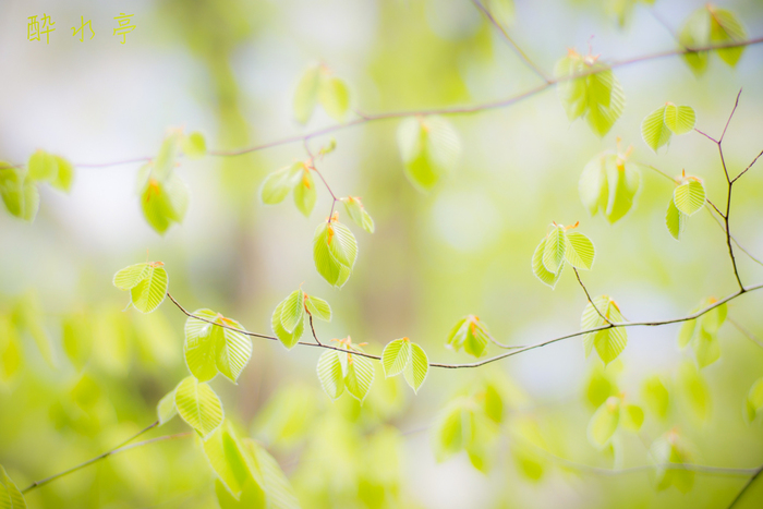 ●どんな色? くすんだ薄緑色  ●名前の由縁 木や草の葉裏の色。「うらばいろ」とも呼ばれます。青々とした表面とは異なり、葉の裏は落着いた色合いをしています。現代の私たちは、つい見過ごしてしまいますが、古の人たちは葉裏の渋い色合いに情緒を感じ、すでに平安時代には使われていた色名だったようです。