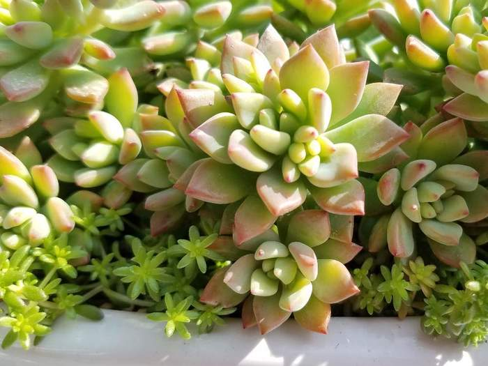 また、サボテンや多肉植物の寄せ植えもとても人気がありますね。ぷにぷにとした可愛い姿で、種類が多いのも魅力。なかには花を咲かせるものや紅葉するものもあります。