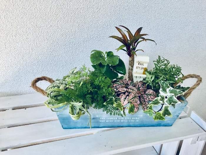 もうひとつ、センスよくおしゃれに見せるためのコツ。葉の大きさや形、色などが違うものを組み合わせると、変化が生まれて表情が豊かになります。また、主役になる特徴的な観葉植物をメインに脇役的な植物を合わせると、お互いがケンカせず、全体の印象がまとまります。