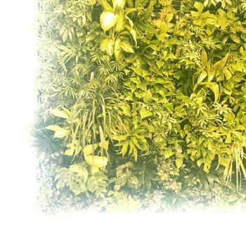 観葉植物には、育つ環境が似たもの同士を組み合わせるのが絶対条件。たとえば、日光を好む植物と日陰を好む植物がありますので、そのどちらかに合わせること。また、水やりのタイミングが合う植物を合わせることも大切です。そうでないと、どちらかが枯れてしまいますのでご注意ください。