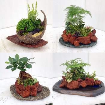 ちょっと盆栽風にも見える観葉植物のアートな寄せ植え。貝殻や流木なども自由な発想で活用しているようですね。寄せ植えの世界が楽しく広がりそう。