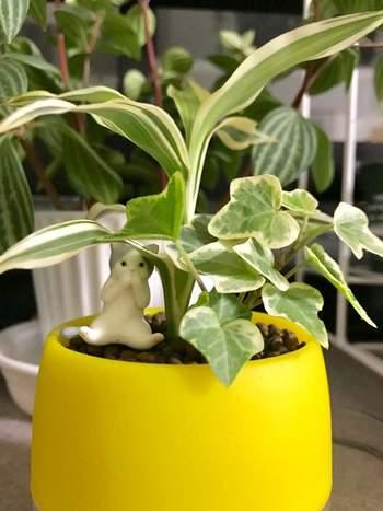 シンプルな観葉植物の寄せ植えにちょっとポップな鉢を合わせてみたり、可愛い小物を飾ってみたり。合わせるもの次第で、印象がぐんと変わってきます。シンプル過ぎるかな…と思ったら、こんなアイデアもおすすめです。