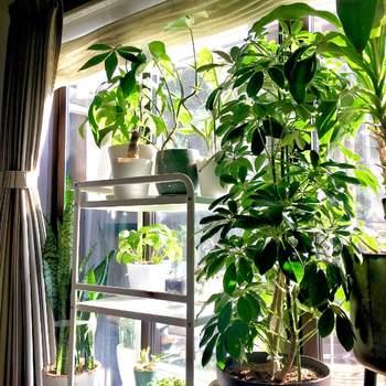 日当たりは、日向、半日陰(明るい日陰)、日陰の3つに分類され、観葉植物それぞれに好む環境が違います。置き場所については、植物の性質を考えながら十分に注意を払いましょう。もし、置き場所が決まっているなら、その場所の環境に合う観葉植物を選んで寄せ植えにするといいですね。