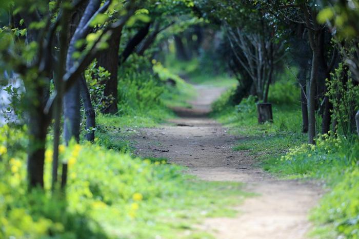 【緑のトンネル】 木々に包まれる小道は、空間自体が葉色に染まって見えることがあります。たゆたうような春の空気が緑がかって、その中に身をおくと、なんとも幸福な気分を味わえるはず。ぜひ近くの公園や森に出かけてみてください。