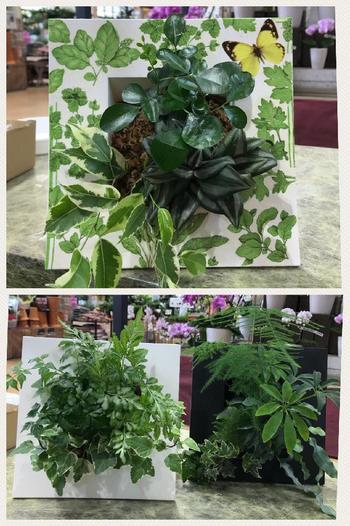 プランターは、下に置くものとは限りません。こちらは、立て掛けスタイルの鉢に植えたミニ観葉植物だとか。意外性が暮らしにわくわく感をもたらしてくれます。