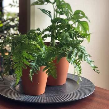 また、観葉植物はじめじめした環境を嫌いますので、風通しのいい場所に置きましょう。じめじめしていると病害虫もわきやすく、観葉植物が長持ちしません。