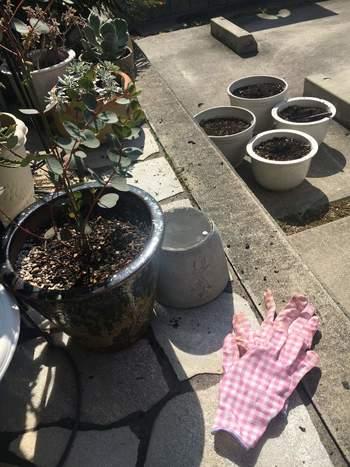 観葉植物は、根を張るスペースが狭くなると元気がなくなってしまいます。1~2年を目安に、サイズの合った鉢に植え替えしましょう。鉢底から水が流れにくくなったら、根詰まりの心配を。植え替えは、5~9月頃が適期。植え替え直後は、日陰に置いて、水やりも控えましょう。