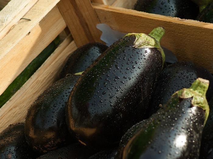 夏野菜の代表格であるナス。実はベランダでのプランター栽培でも育てることができる、家庭菜園初心者にもおすすめの野菜です。ナスのよいところは、なんと言っても大きな野菜が実ること!水や肥料をたっぷりとあげれば、夏には立派なナスがたくさん収穫できます。今年のゴールデンウィークは、ナスの植え付けに挑戦してみませんか?