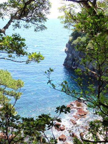 所々から見られる断崖絶壁、伊豆の海や島々を眺めながらのハイキングコースです。歩く際はスニーカーなどの動きやすい靴がおすすめ。