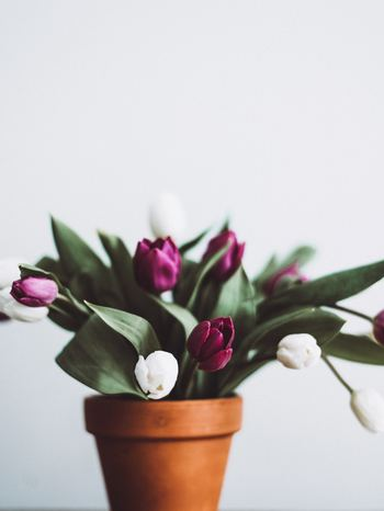 空き瓶などに入れて、鉢植えのなかに飾ってみるのもアリです。まるで直に植えられているようなルックスがほほえましいですね!
