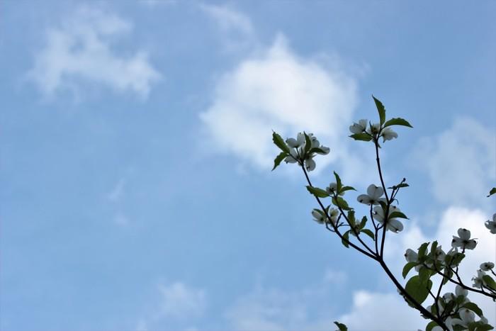 【春の青空】 春の晴れ渡った空は、どことなく柔らかで優しい青。生命が生まれ育まれる季節を、穏やかに包み込んでくれます。森の木々たちが芽吹き、水蒸気が発せられることで、森には春のかすみが生まれるのだそう。春の空が優しいのは、命の育みを見守ってくれているからなのかもしれませんね。