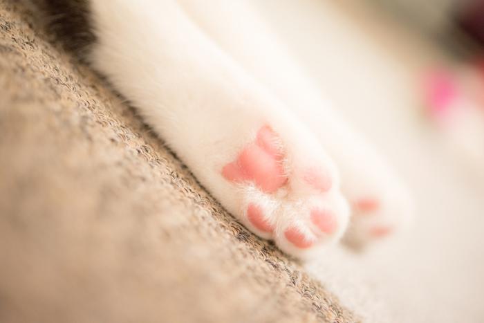 【ネコの肉球】 一年中ピンクですが……陽だまりで寝ているネコを見ると、なんだか春らしい情景だと思ってしまいますよね。つられてこちらも眠くなってしまった経験を持つ人も多いのでは。「春眠暁を覚えず」というくらいですから、まどろみも春の贈り物として受け取っておきましょう。