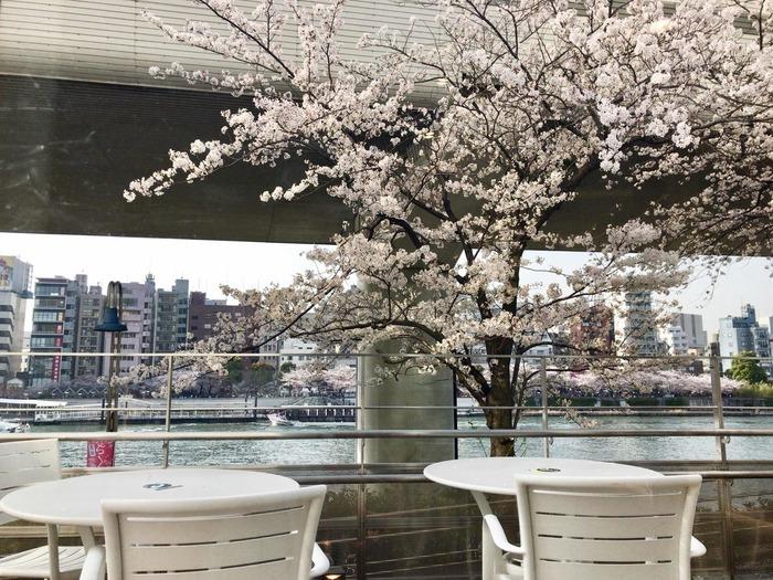 場所は、墨田区側の隅田公園内にあり、カフェスペースは少し高い位置なので川面がキレイに見えます。春はお花見の穴場スポットでもあるんですよ。