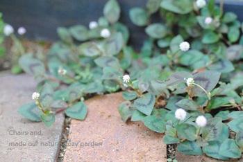 レンガのすき間から植物が顔を出すのも可愛いですね。ただし、ミントなどは繁殖力が強いので、地植えは絶対NGだとか。植える前に特性をチェックして品種を選びましょう。また、草が生えるのを避けたい場合は、防草シートを下に張る方法もあるようです。