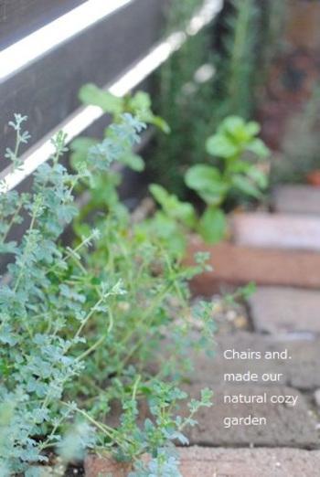 観葉植物やハーブなどを脇のスペースに植えると、とてもおしゃれでナチュラルな雰囲気になります。レンガは、洋風のおうちによく合いますね。