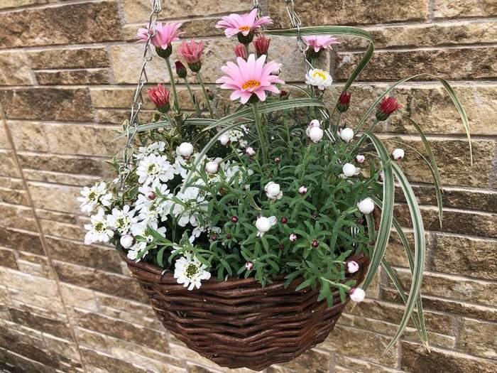 鉢やプランターを置くのもいいですが、ハンギングスタイルの花もおしゃれで玄関に似合いますね。高い位置に目線が行き、空間を立体的に彩ってくれます。リースなどの代わりもなりそう。