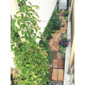 そして、本格的なDIYの場合は、モルタルやコンクリートでレンガなど敷き詰める素材を固めながら設置していきますが、簡単DIYならモルタルなしでも。こちらは、モルタルなしで、女性がひとりでたった1日で作ったアプローチの小道。曲線の道は、脇のスペースの植栽も美しく見えますね。※耐久性などを考える場合は、モルタルを使用するのがおすすめ。