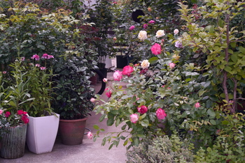 玄関へのアプローチを花で飾るのもポピュラーで素敵なアイデア。写真のようにたくさんの鉢を並べたり、植栽するのもいいですね。