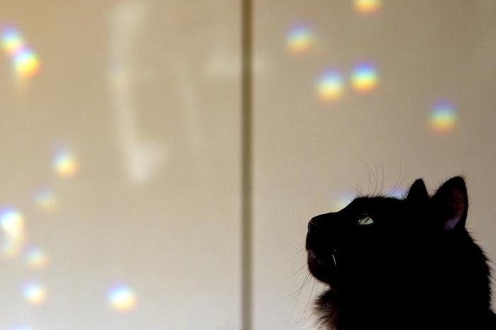 そんな、小さな虹の光が部屋の中に投影され、どこか幻想的な雰囲気に。