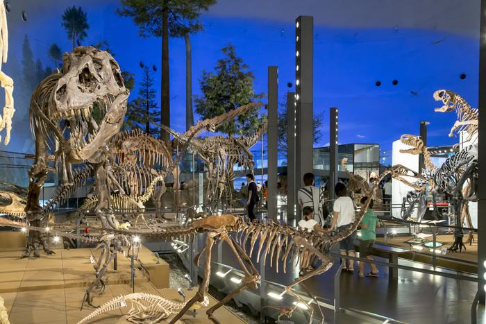 勝山市は、福井県の北東部に位置する恐竜の化石がたくさん発掘されている場所。その勝山に2000年にオープンしたのが、【福井県立恐竜博物館】です。実物大の骨格がたくさん並んでいる様子は迫力満点!お子さんと一緒の家族旅行にぴったりですよ。