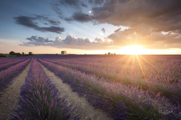 世界最大級のラベンダー畑に酔いしれるなら、ヴァレンソール高原にぜひ訪れてみてください。一面に敷き詰められたラベンダー畑は、まるで風に揺れる絨毯のよう。辺りには優しい香りが漂います。  また、ほとんどのラベンダー畑には入ることができるので、間近で花の香りや色彩を楽しむことが可能です。