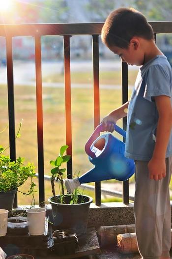 きゅうりは乾燥に弱い植物です。育ったきゅうりを食べて苦いと感じた時は、水やりが充分でなかった可能性も。土の状態をよく観察し、乾いていたらたっぷり水を与えるようにしましょう。ただし真夏はすぐに水温が上がってしまうので、最も暑い昼間を避け、涼しい朝や晩に様子を見ながら水やりします。 また、晴天が5日以上続いた時は葉の裏にも水をかけてやると苗も元気になり、ハダニなど害虫の発生を軽減できます。
