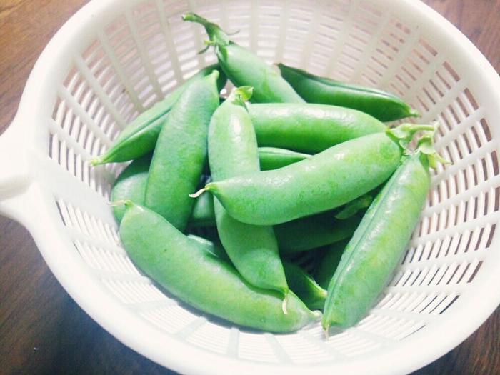 そして、サヤエンドウがさらに完熟すれば、実だけを楽しむふっくらしたグリーンピースになります。こんな収穫の楽しみも素敵ですね。