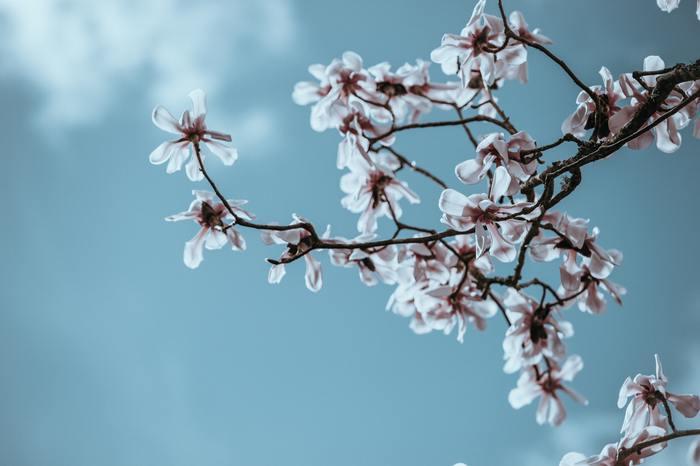 春を感じられる穏やかな気候はとても短く貴重な時です。ただでさえ変化の大きい時だから、無理に頑張ろうとせず、風や花の香りを感じ、ゆっくりと過ごしてみませんか?